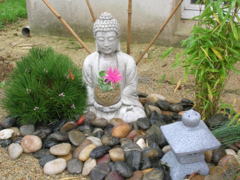 Le jardin de chez mes parents. Dscn1745