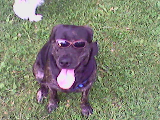 """Concours de la photo de chiens la plus """"belle"""" - Page 2 10109910"""