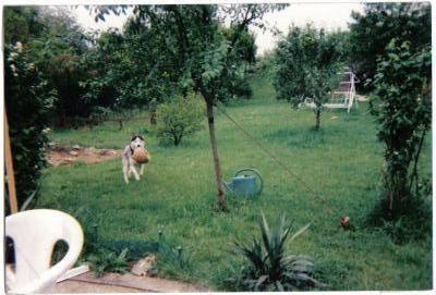 chiens d' élevage . . . - Page 2 77025310