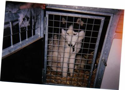 Nos loups grandissent, postez nous vos photos - Page 2 77026310