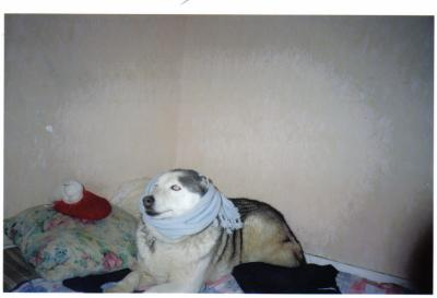 """Concours de la photo de chiens la plus """"belle"""" - Page 2 77027110"""