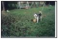 Nos loups grandissent, postez nous vos photos - Page 2 M1010111