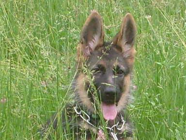 Nos loups grandissent, postez nous vos photos S7300710
