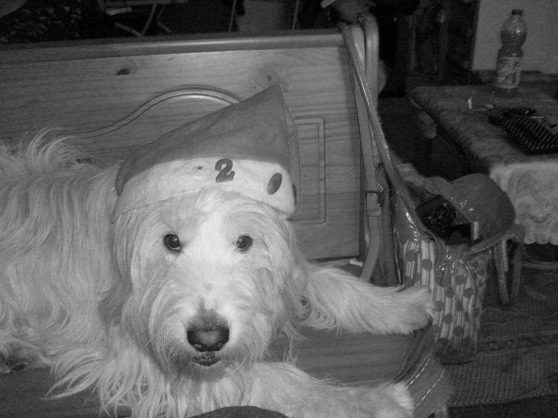 """Concours de la photo de chiens la plus """"belle"""" - Page 2 S7301810"""
