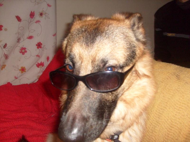 """Concours de la photo de chiens la plus """"belle"""" - Page 2 S7302133"""