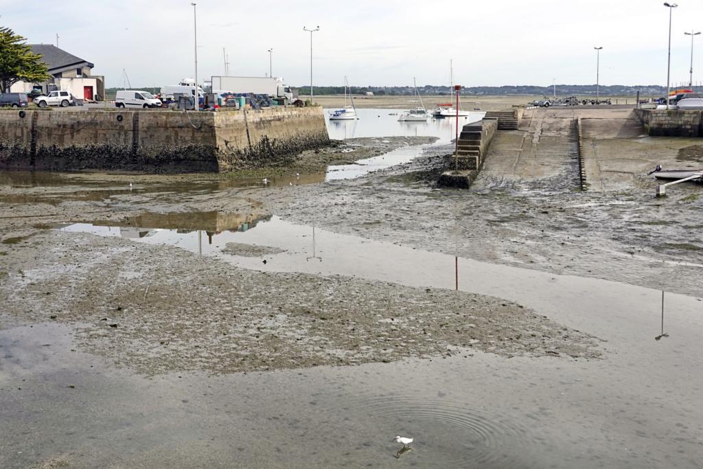 [Activité hors Marine des ports] LE CROISIC Port, Traict, Côte Sauvage... - Page 10 40_11h10