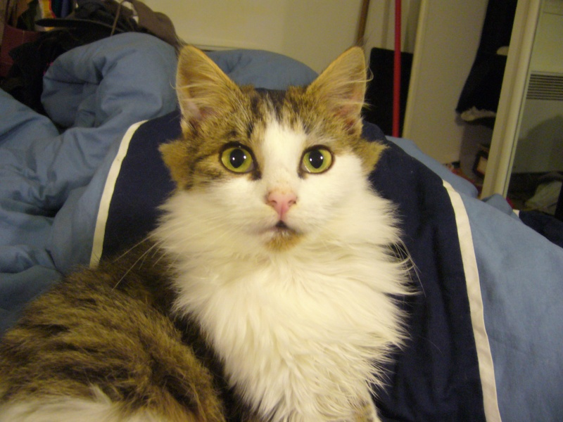 Les cycy's pets Sushie13