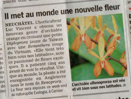 Nouvelle espèce d'orchidée en Suisse 20_min10