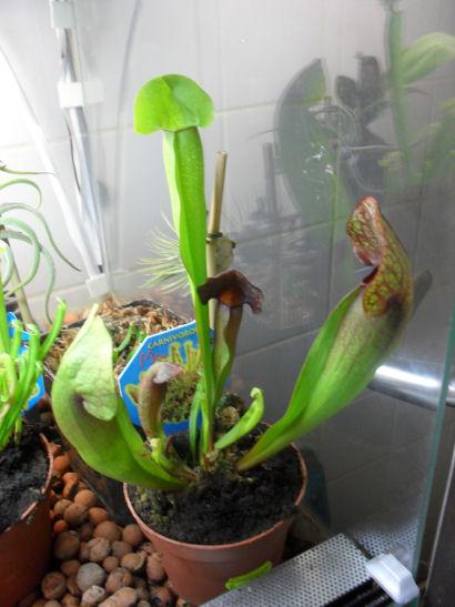 INFO Michcarni : Il y a bien des plantes à Point Vert 25_10_14
