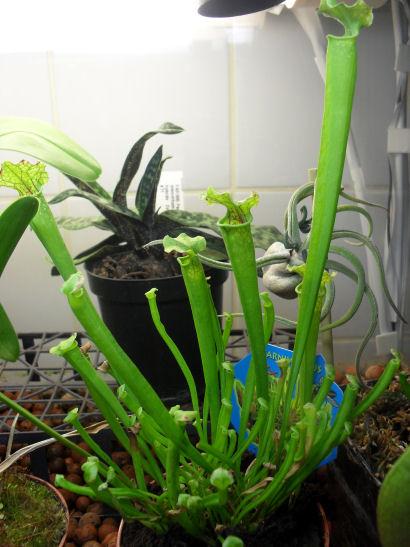 INFO Michcarni : Il y a bien des plantes à Point Vert 25_10_15