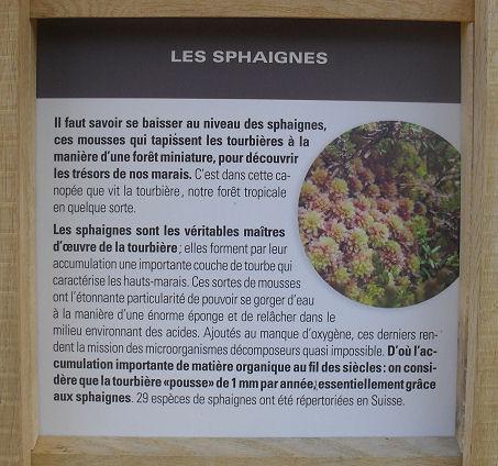 Tourbière de Le Crêt (Commune de la Verrerie - FR) Panno_13