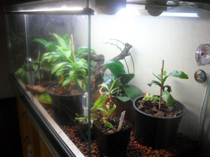 Mon terrarium de 120x50x60 Sdc10510