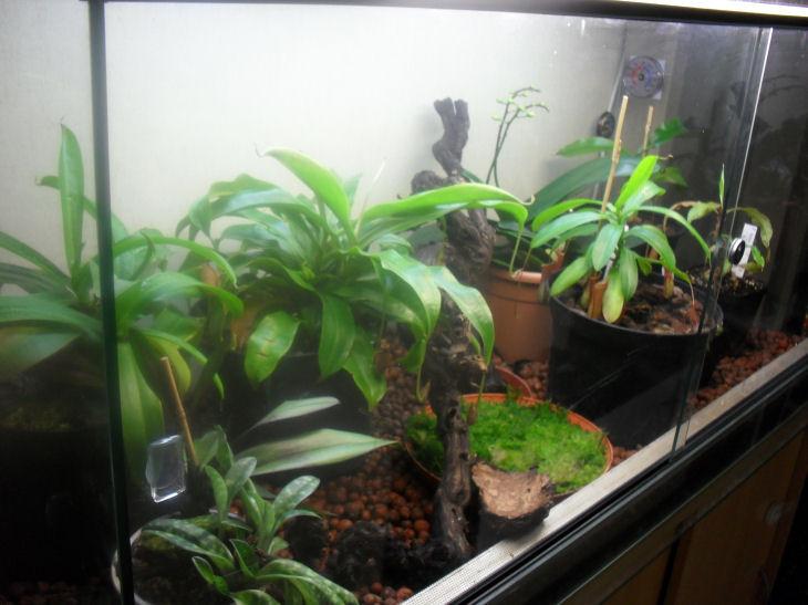Mon terrarium de 120x50x60 Sdc10511