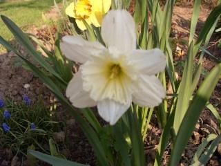 premieres fleurs Sdc13413
