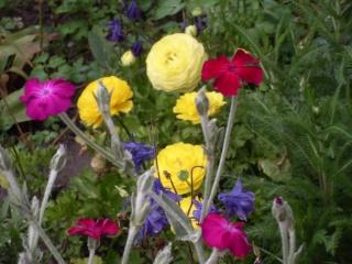 Belles de l'été -2009- !!! Sdc15210