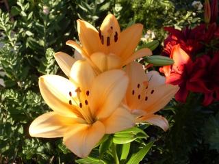 Belles de l'été -2009- !!! Sdc15317