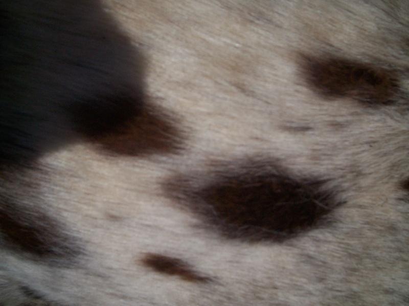 les taches de mon nounours en gros plan Chevau12