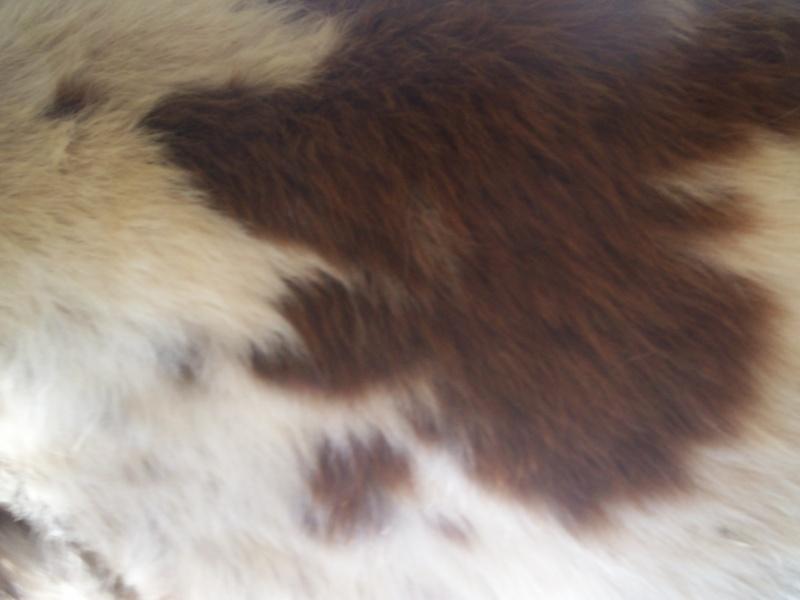 les taches de mon nounours en gros plan Chevau13
