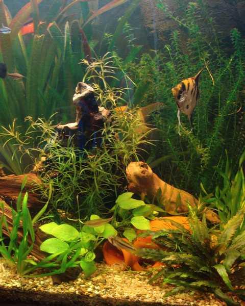 l aquarium de kdfred 200litres - Page 3 Dsc00010