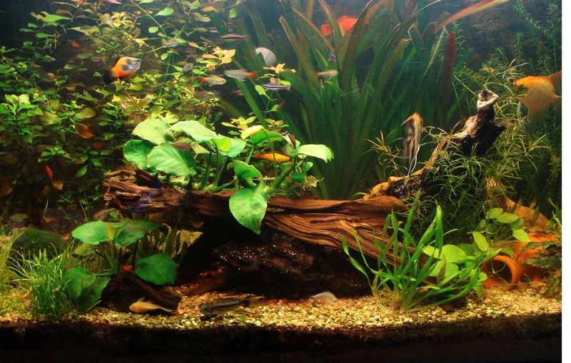 l aquarium de kdfred 200litres - Page 3 Dsc00011