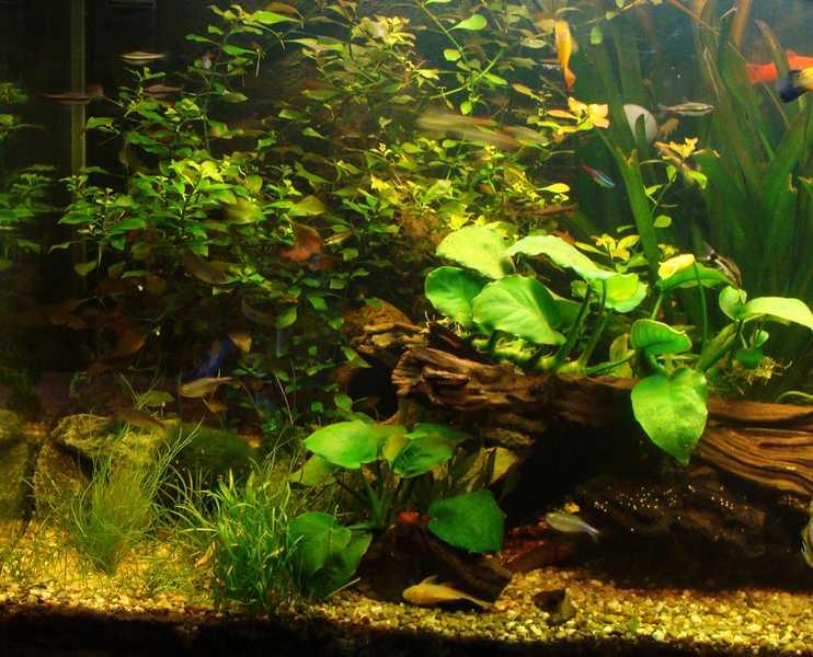 l aquarium de kdfred 200litres - Page 3 Dsc00012