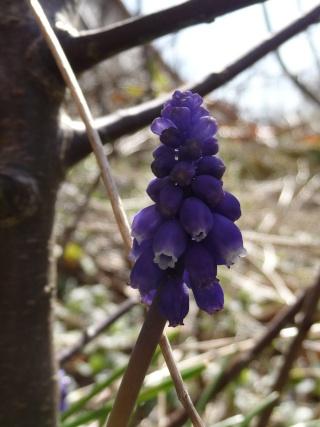 Des photos du printemps P1010111