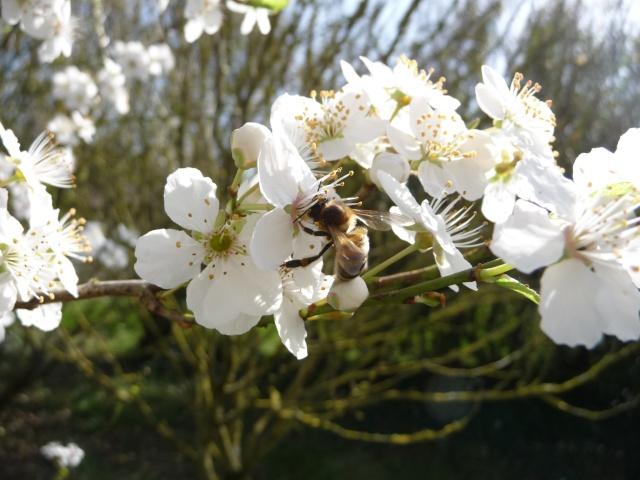 Des photos du printemps P1010113