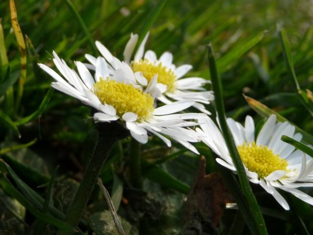 Des photos du printemps P1010415