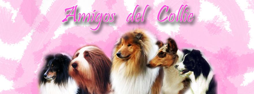 Amigos del Collie