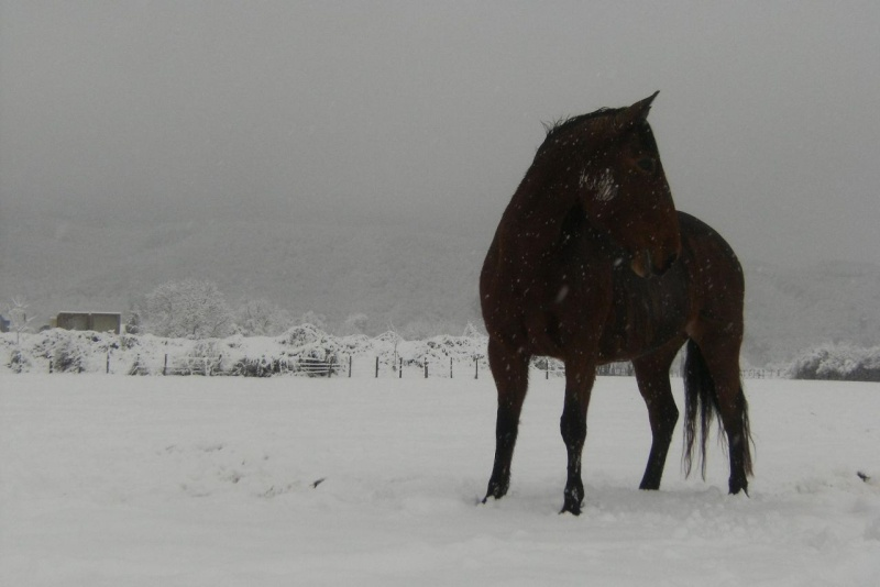 Le cheval et la neige, gagnant : Chris - Page 3 29685110