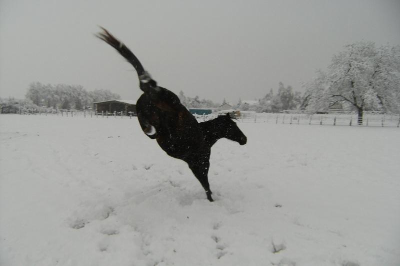 Le cheval et la neige, gagnant : Chris - Page 3 Dscf1410
