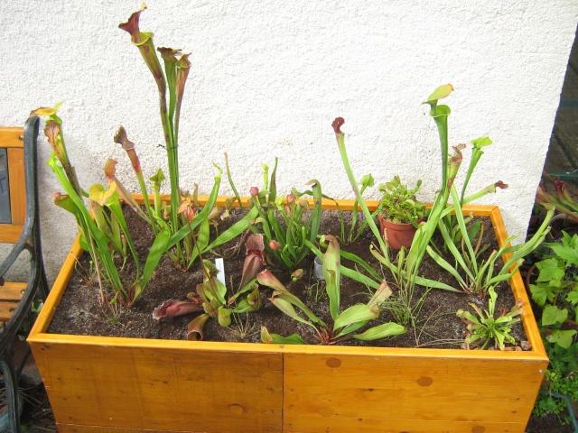 projet de jardinière tourbière - Page 3 Etape_10