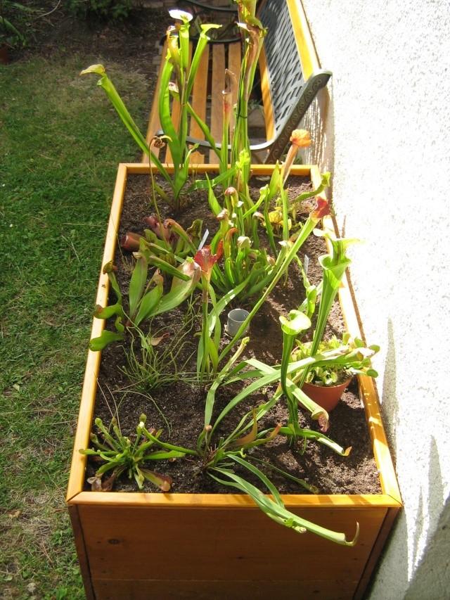 projet de jardinière tourbière - Page 3 Etape_12