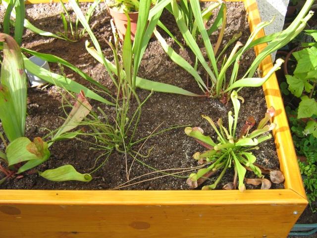 projet de jardinière tourbière - Page 3 Etape_14