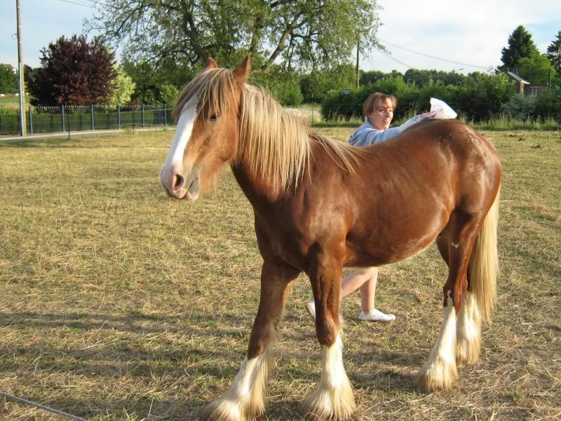 Une photo de vous et votre cheval - Page 2 Mon_am18
