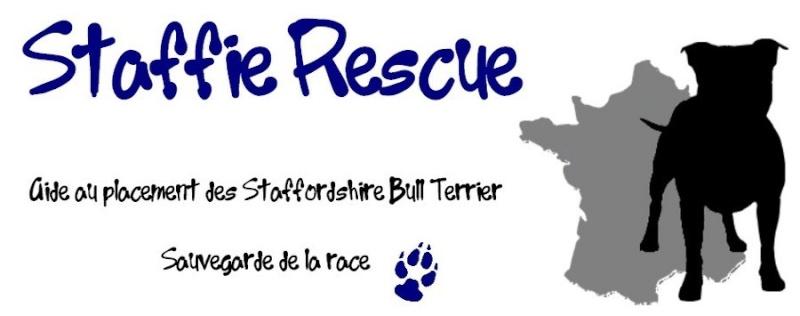 Staffie Rescue Header10