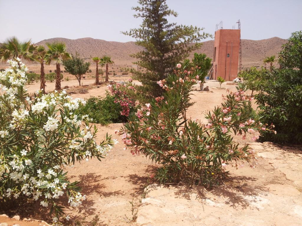 [Maroc Camp/Dernières nouvelles]  BOUIZAKARNE : Camping Tinnoubga   - Page 7 8f660510