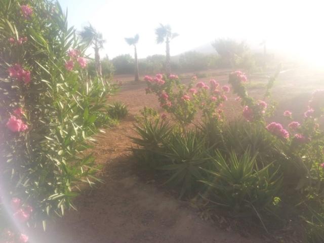 [Maroc Camp/Dernières nouvelles]  BOUIZAKARNE : Camping Tinnoubga   - Page 8 Img_3412