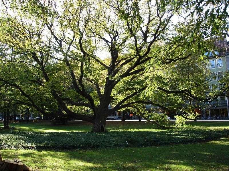 Fotoprojekt - Bäume - Seite 3 200jah10