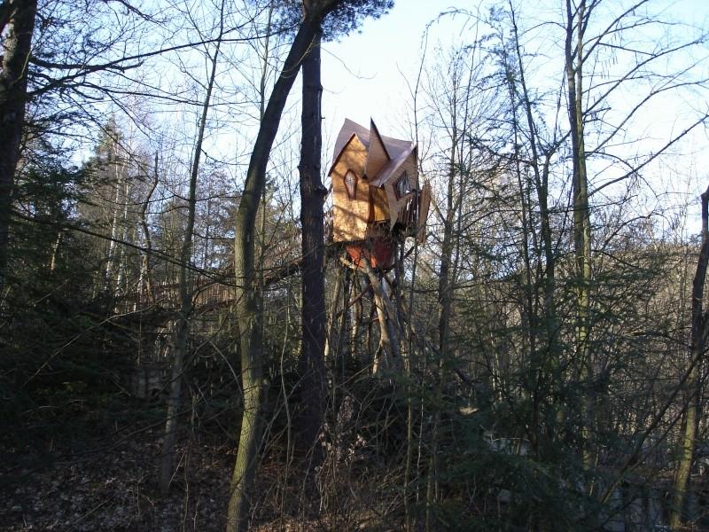 Fotoprojekt - Bäume - Seite 3 Dsc00910