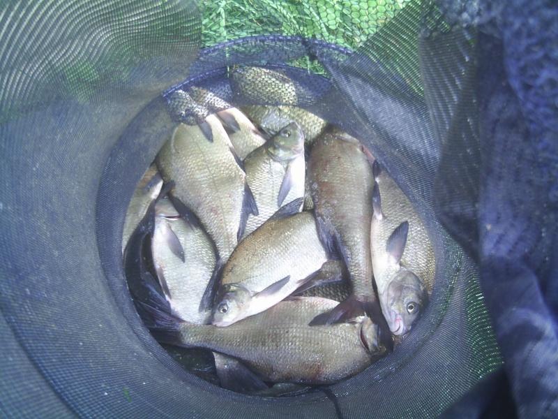 pêche a st Jean/Mayenne St_jea18