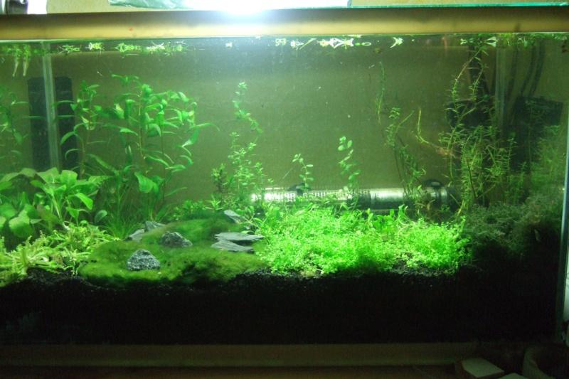 Mes aquariums - Page 3 Dscf3013