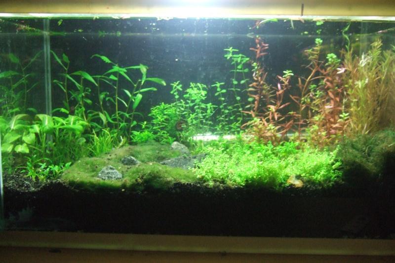 Mes aquariums - Page 4 Dscf3016