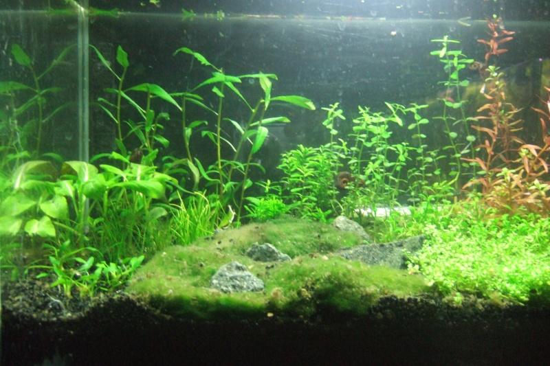 Mes aquariums - Page 4 Dscf3017