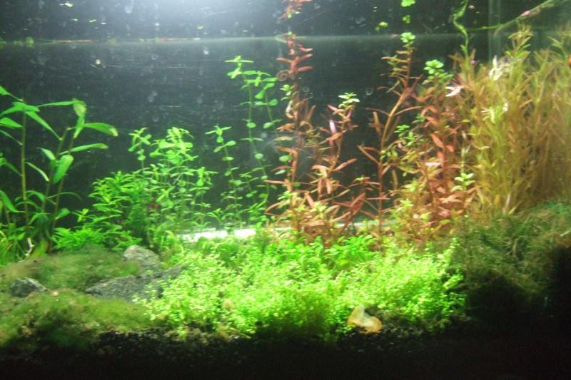 Mes aquariums - Page 4 Dscf3018