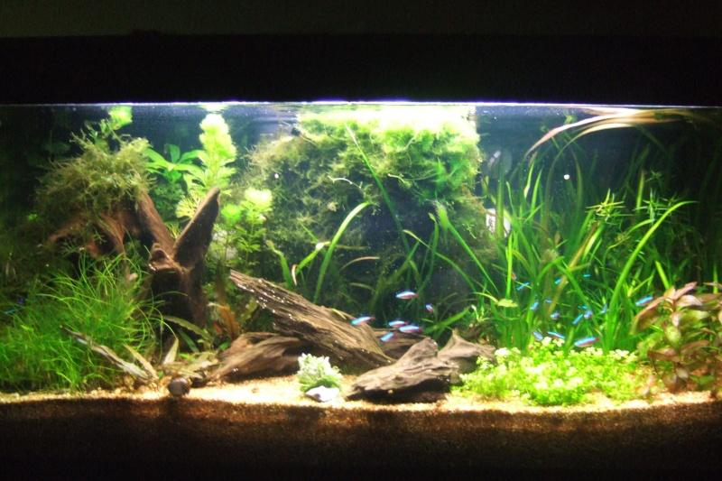 Mes aquariums - Page 4 Dscf3019