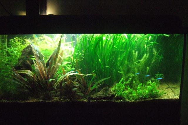 Mes aquariums - Page 7 Dscf3410