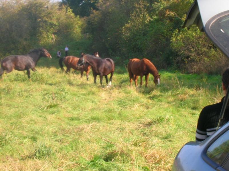 cheval - Constituer un groupe de chevaux Midi_f10