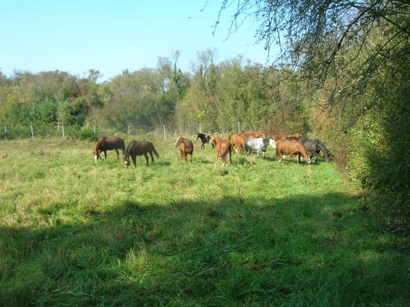 cheval - Constituer un groupe de chevaux Midi_f11