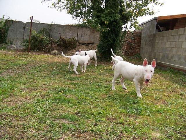 mes bulls 6210